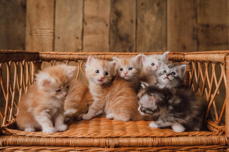 Oh wie süß! Tierisches Newbornshooting bei Sternenregen Photographie
